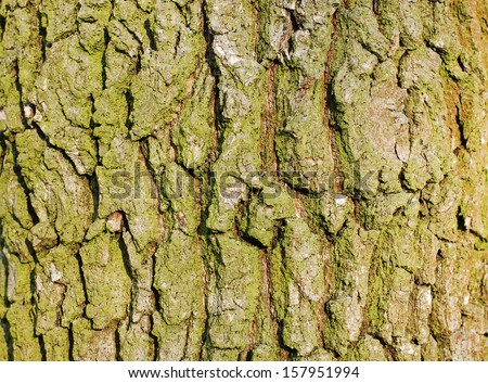 Wood Tree Texture Background Pattern  - stock photo