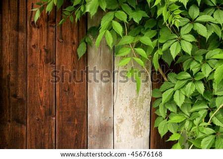 Wood wall with green leaves - stock photo