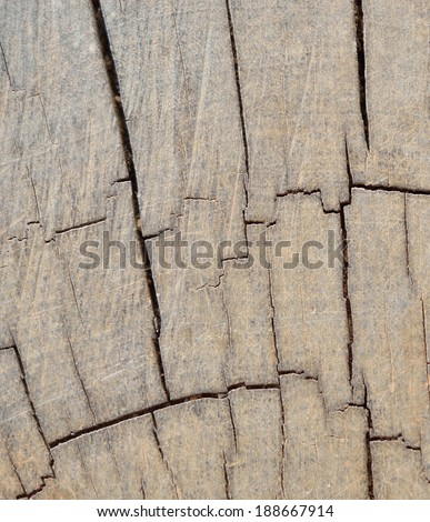 Wood with moss texture pattern background  - stock photo