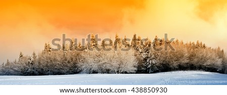 wood with snow at sunset in winter - stock photo