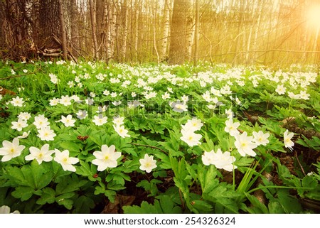 Wood with spring flowers - stock photo