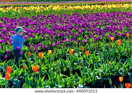 WOODBURN, OR - MARCH 30: Young child in a tulip field in Woodburn, OR on March 30, 2016