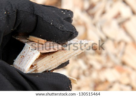 Woodchips on a woman's hand, space for your text on the right. - stock photo