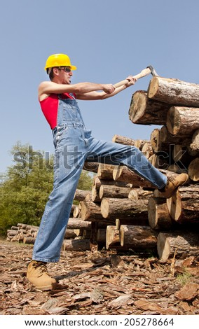 woodcutter cuts the tree in the forest/woodcutter