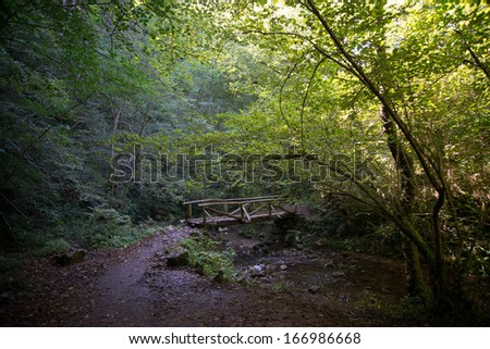 Wooded area with wooden bridge and a lot of vegetation in Asturias (Spain)