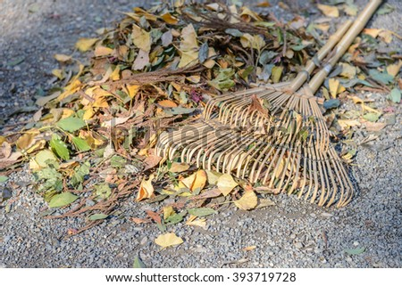 wooded fan rake on heap leaves in autumn season - stock photo