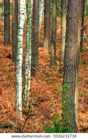 Wooded landscape of an European mixed forest thicket in autumn season in central Poland