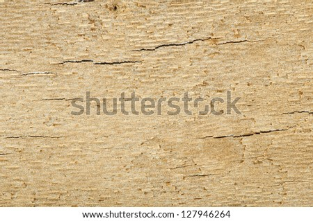 Wooden background. Peace of wooden bark .