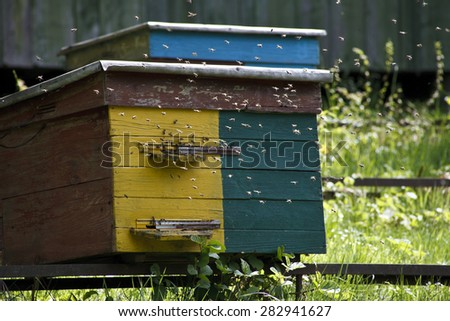 wooden beehive and a lot of bees
