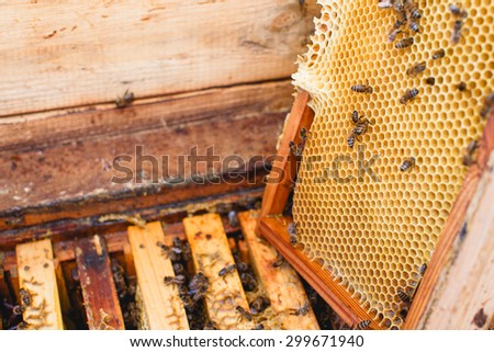 Wooden beehive with frames of honeycomb inside, standing in the yard, one frame, with bees on it, is put off, close up - stock photo