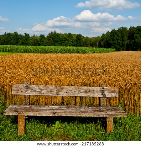 Wooden Bench against the Background of Wheat and Corn Fields in Bavaria, Germany - stock photo