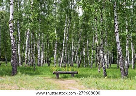 wooden bench in a birch grove - stock photo