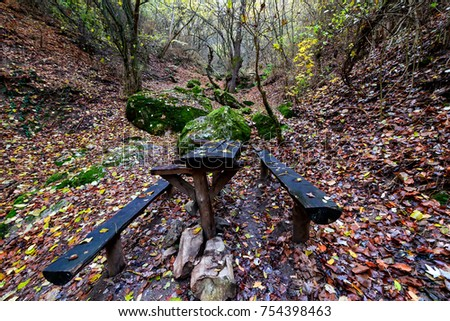 Wooden bench on the forest