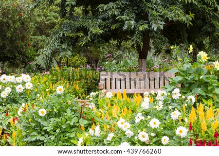 Wooden benches in the park in the summer garden colorful.