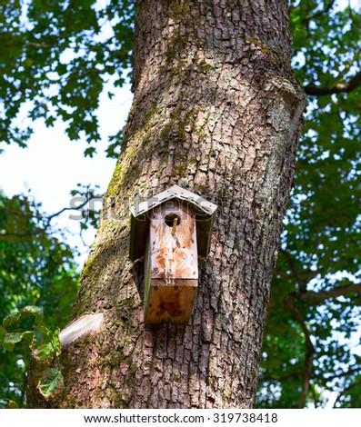 Wooden birdhouse on the tree. - stock photo
