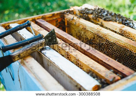 Wooden blue beehive with different wooden frames of honeycomb and bees inside standing in the yard, close up - stock photo
