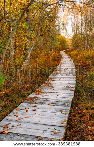 Wooden boarding path way pathway in autumn forest near bog marsh.