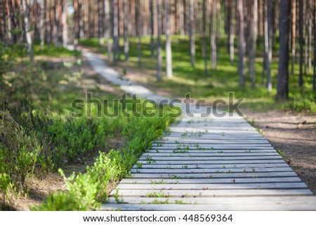 Wooden boardwalk in a pine forest with sunlight shining through the trees - stock photo