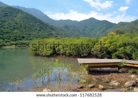 wooden boardwalk in wetland forest - stock photo