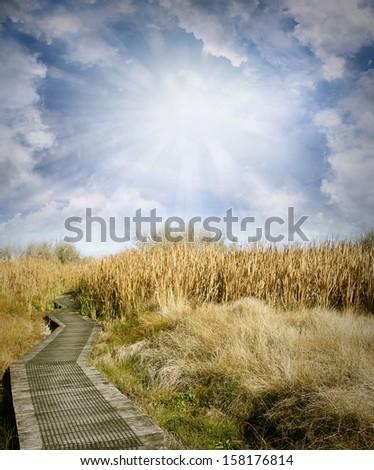Wooden boardwalk leading into wetland - stock photo