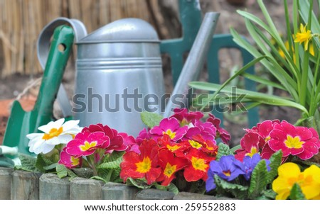 wooden border with colorful pansies  and gardening tools