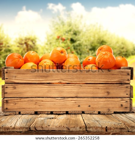 wooden box of orange fruits  - stock photo