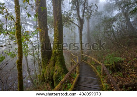 Wooden Bridge at Misty Tropical Rain Forest (Angka Nature Trail,Doi Inthanon National Park),Chiang Mai, Thailand - stock photo