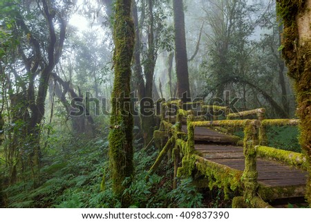 Wooden Bridge at Misty Tropical Rain Forest (Angka Nature Trail,Doi Inthanon National Park),Chiang Mai, Thailand