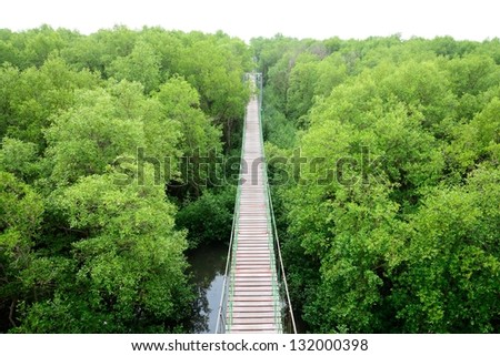 Wooden bridge go to mangrove forest - stock photo