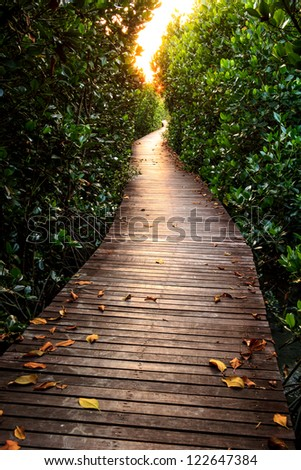 Wooden Bridge In Mangrove Forest - stock photo
