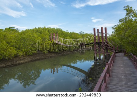 Wooden Bridge In Mangrove Forest, The Nature Trail