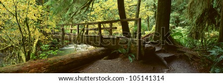 Wooden Bridge In The Hoh Rainforest, Olympic National Park, Washington - stock photo