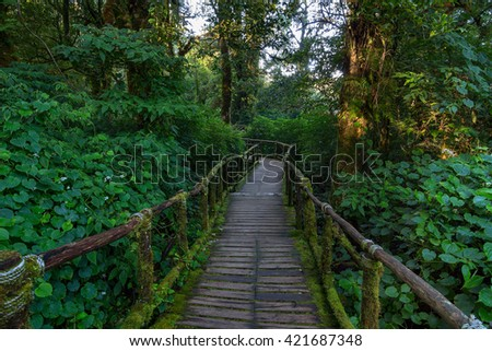 Wooden Bridge in Tropical Rain Forest (Angka Nature Trail,Doi Inthanon National Park),Chiang Mai, Thailand