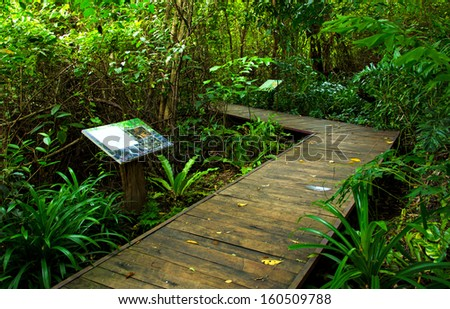 Wooden bridge pathway in the forest at national park. - stock photo