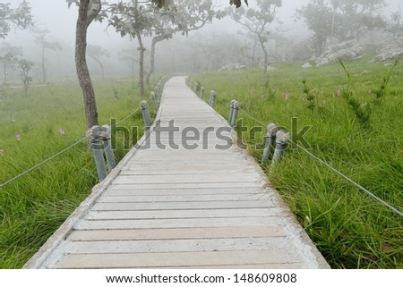 Wooden bridge through - stock photo