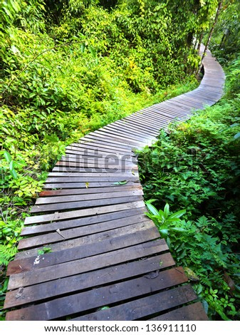 Wooden bridge through the mangrove reforestation - stock photo