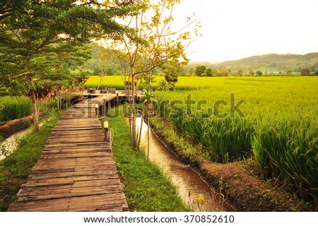 Wooden Brudge in The Rice Field - stock photo