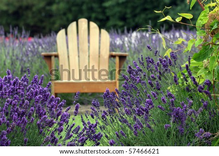 wooden chair in the lavender - stock photo