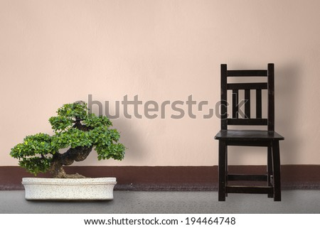 Wooden Chair with bonsai tree in front wall  - stock photo
