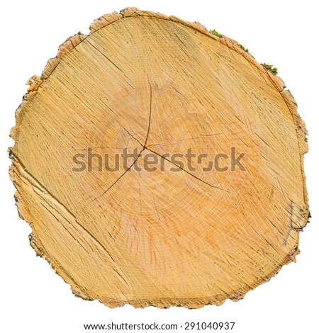 Wooden cut isolated on a white background