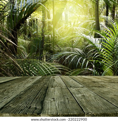 Wooden deck in tropical forest - stock photo