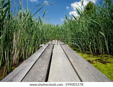 Wooden dock - stock photo