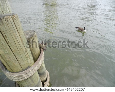 Wooden dock pilings with steel rope and goose