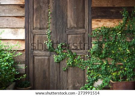 wooden door with green creeper plants - stock photo