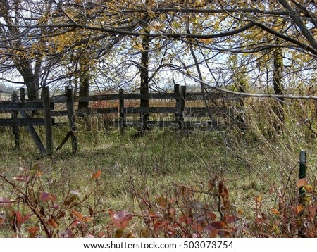 wooden fence among trees weeds autumn foliage