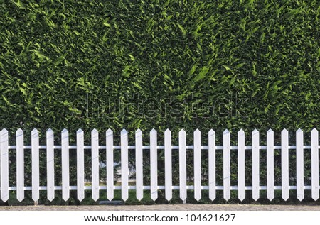 Wooden fence with hedge