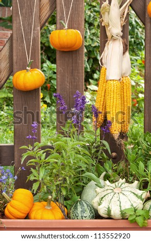 wooden fence with pumpkins and corns/fence/autumn