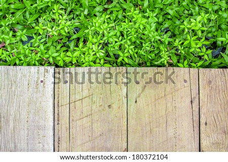 wooden floor with green plant background.
