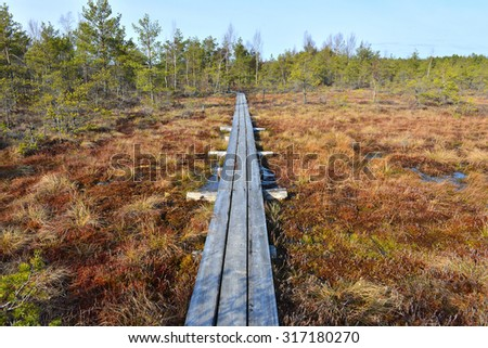wooden footbridge in the bog. Cenas bog in Latvia. Special Area of Conservation - stock photo