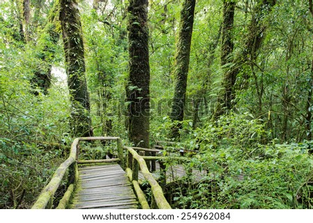 Wooden footpath at the evergreen forest - stock photo